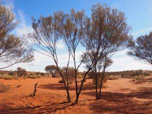 Free camping spot - Uluru