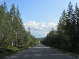 Hundreds of kilometers through the pine trees